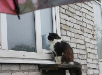 В Свердловской области действует экстренное предупреждение из-за сильного ветра и мокрого снега