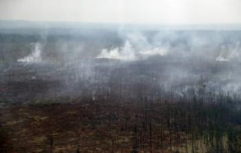 Иркутские СМИ обвинили чиновников в причастности квозникновению лесных пожаров