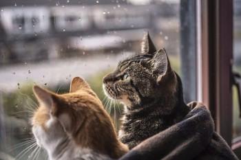 На этой неделе в Нижнем Тагиле будет прохладно и дождливо
