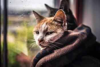 На этой неделе жителей Нижнего Тагила ожидают сильные дожди