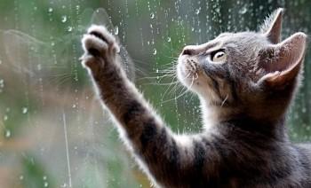 В выходные жителей Нижнего Тагила ждут дожди и похолодание