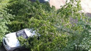 В Нижнем Тагиле во дворе жилого дома дерево упало на припаркованные автомобили