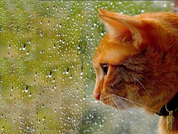 В выходные жителей Нижнего Тагила ждут дожди и плюс 8 градусов по вечерам