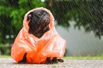 Дожди и северо-западный ветер ждут жителей Нижнего Тагила в ближайшую неделю