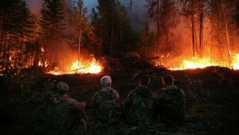 Минприроды предложило запретить регионам отказываться от тушения лесов