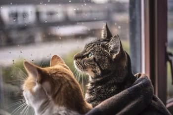 В Нижнем Тагиле конец июня будет холодным и дождливым