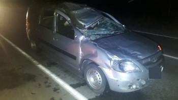 На трассе возле посёлка Лосиный три пассажира «Лады» пострадали после столкновения с лосем