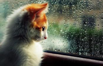 После изнуряющей жары в Нижний Тагил придут дожди