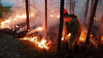 Под Нижним Тагилом сгорело более 42 гектаров леса