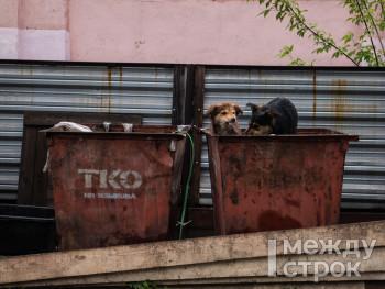 Депутаты Нижнего Тагила обратились в облправительство из-за надвигающейся в городе мусорно-экологической катастрофы