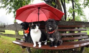 В выходные жителей Нижнего Тагила ждут дожди и плюс 24 градуса
