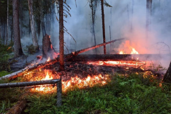 Взаповеднике «Денежкин Камень» удалось остановить продвижение лесного пожара