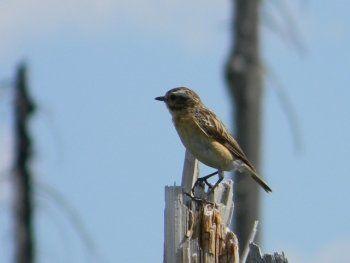 Висимский заповедник пригласил тагильчан посчитать птиц