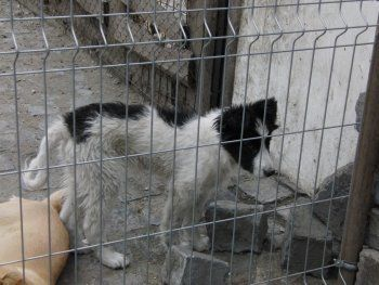 Суд обязал тагильский приют для животных выплатить коммунальщикам 117 тысяч рублей. «Мы живём в стране вечнозелёных помидоров и абсурда»