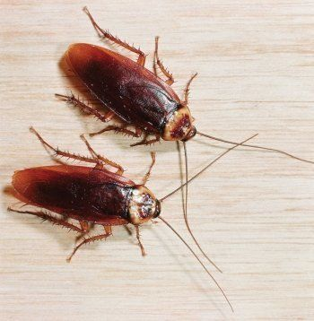 Повышенная радиация, тараканы и врачи без прививок…