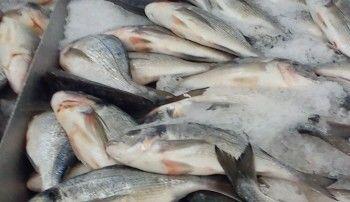Росрыболовство поддержало эмбарго на поставку рыбы из Турции