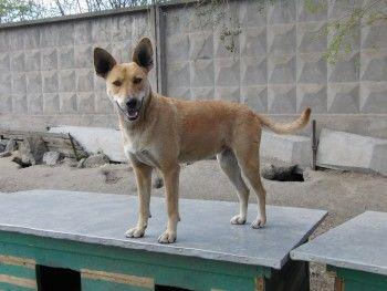 «О нас помнят, только когда мы нужны». В Арбитражный суд подан иск о взыскании долгов с Нижнетагильского приюта для животных