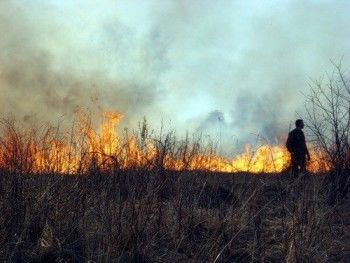 В России запретили жечь сухую траву
