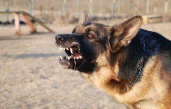 «На людей нападают, завтра собаки могут нас всех…» Чиновники мэрии Нижнего Тагила просят депутатов о срочном выделении денег на отлов бродячих собак