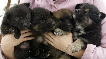 Почему тагильские зоозащитники не дружат между собой?
