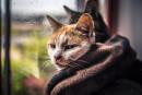В выходные в Нижнем Тагиле будет пасмурно и по-осеннему холодно