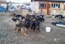 ВЕкатеринбурге СК начал проверку пофакту нападения стаи собак намать сколяской