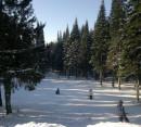 Мэрия Нижнего Тагила объявила конкурс на реконструкцию лесопарковой зоны «Пихтовые горы» за 145 млн рублей