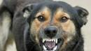 Житель Каменска-Уральского заплатит штраф в 30 тысяч рублей инвалиду, пострадавшему от его агрессивной собаки