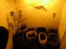 В Нижнем Тагиле мужчина арендовал у знакомых гараж и выращивал там марихуану