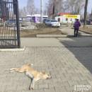 В Горнозаводском управленческом округе построят приют для бездомных собак
