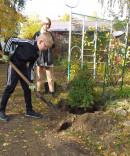 Туи, карликовые берёзы и арахис. В Нижнем Тагиле появился настоящий Демидовский сад