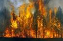 В Госдуму поступил законопроект о возврате полномочий по тушению лесных пожаров на федеральный уровень